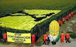 Greenpeace Protest gegen genveränderten Mais